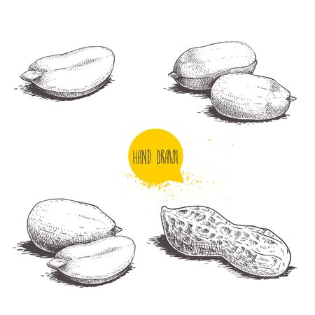 Peanuts sketch set. Hand drawn retro style vector illustrations of organic food. Seeds and shells. Single and group. Vintage engraving art. Isolated on white background.