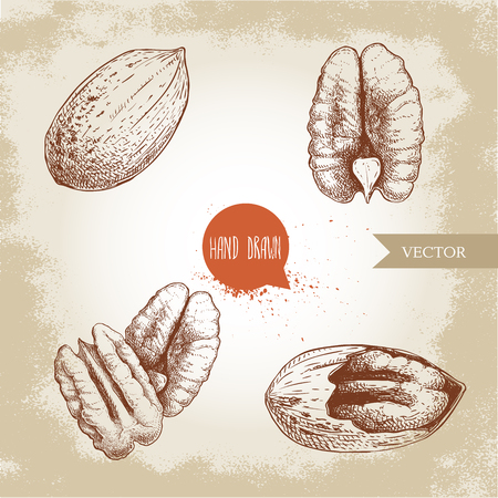 Pecan nuts set. Peeled core and whole shell. Hand drawn sketch style vector collection. Organic exotic food illustrations isolated on retro background.