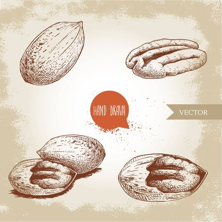 Pecan nuts set. Peeled core and whole shell composition. Hand drawn sketch style vector collection. Organic exotic food illustrations isolated on retro background.
