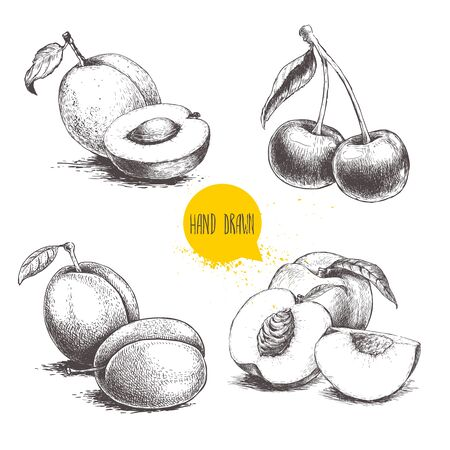 Hand drawn sketch style summer fruits set. Plum, apricot, cherry and peach compositions. Healthy organic food. Farm market products. Best for package design. Vector illustration. 写真素材 - 128379270