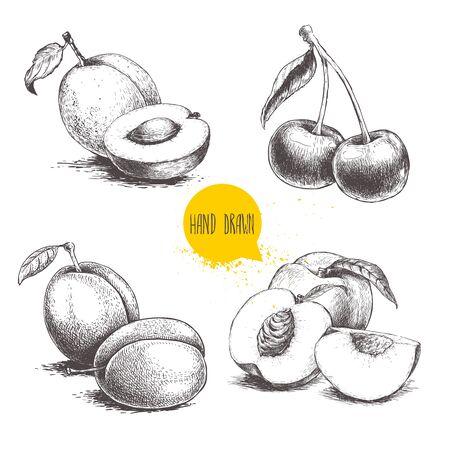 Insieme di frutti estivi in stile schizzo disegnato a mano. Composizioni di prugne, albicocche, ciliegie e pesche. Cibo biologico sano. Prodotti del mercato agricolo. Ideale per il design del pacchetto. Illustrazione vettoriale. Vettoriali