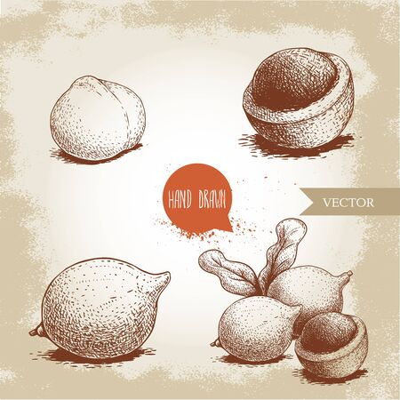 Hand drawn sketch style macadamia nuts set. Whole, peeled, single and group. Vector illustrations isolated on old looking background.