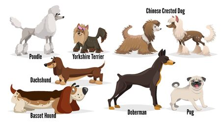 Cute cartoon dogs set. Poodle, pug, chinese crested, dachshund, doberman, basset hound, yorkshire terrier. Vector illustrations.