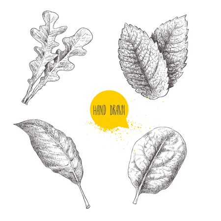 Herbs sketch set. Arugula, mint leaves, basil and bay leaf. Hand drawn vector illustrations. Retro style for food design, kitchen and market. Isolated on white.