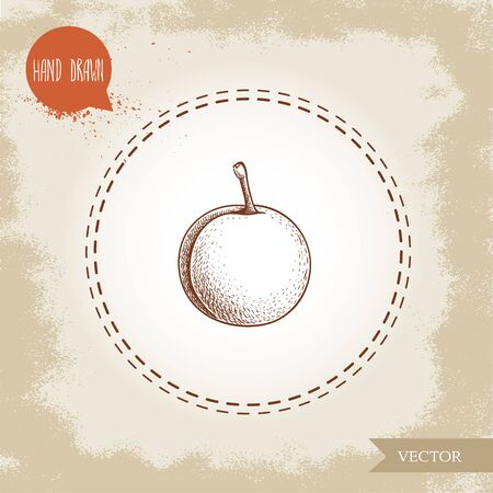 Hand drawn sketch style yellow plum mirabelle. Single whole fruit isolated on retro background. Vector illustration. 向量圖像