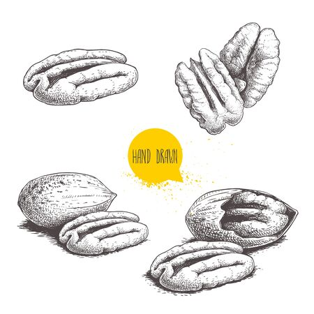 Pecan nuts set. Peeled core and whole shell. Hand drawn sketch style vector collection. Organic exotic food illustrations isolated on white background.