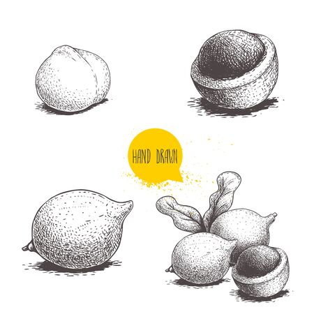 Hand drawn sketch style macadamia nuts set. Whole and half peeled macadamia fruits. Vector illustration in retro style. Nuts collection drawings. Isolated on white background. Ilustração