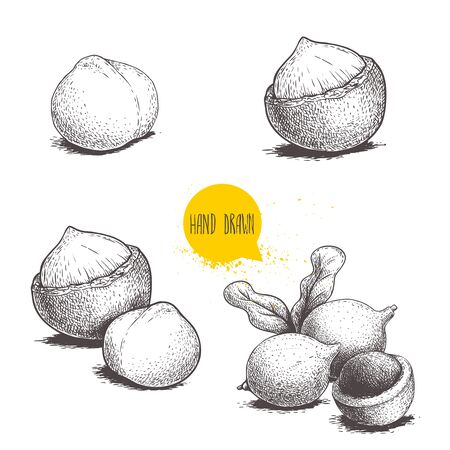 Hand drawn sketch style macadamia nuts set. Whole, peeled, single and group. Vector illustrations isolated on white background.  イラスト・ベクター素材
