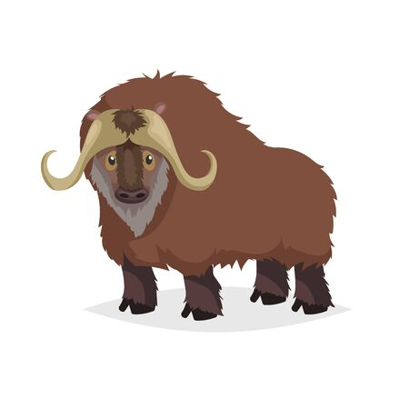 Cute cartoon muskox. Wild animal. Vector illustration for child books. Big furry cattle animal. Isolated on white background.