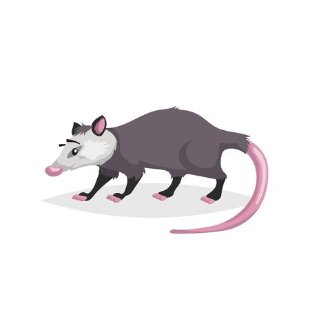 Cute cartoon opossum. North America wild animal. Vector drawing for kid and child books. Isolated on white background. Ilustração