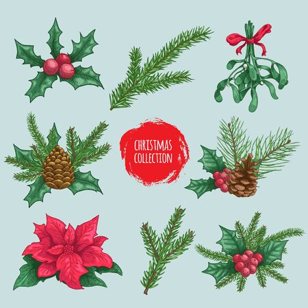 Winter plants elements and compositions. Holly berries, mistletoe, poinsettia, fir branch, pine branches. Hand drawn sketch style colortful natural objects. Best for Christmas decorations and designs.