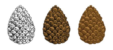 Pine cones vector set. Different hand drawn sketch styles. Botanical drawing. Winter holidays, Christmas symbols. Isolated on white background.