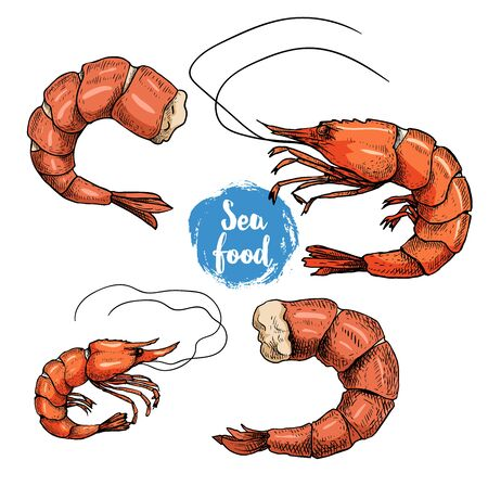 Hand drawn sketch style seafood set. Colorful drawings. Shripms, prawns, grilled shrimps collection vector illustrations. Isolated on white background.