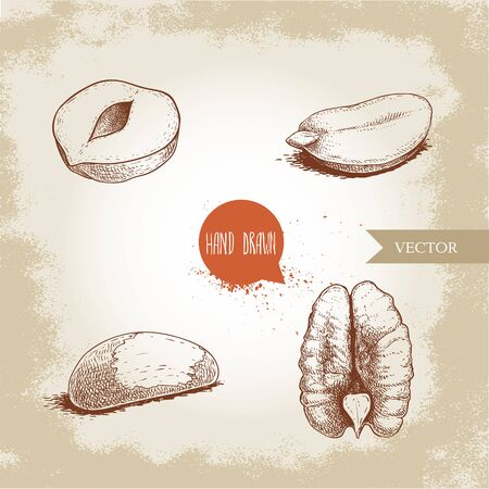 Hand drawn sketch style nuts set. Cores of hazelnut, peanut, brazilian nut and pecan. Healthy food illustration. Vector drawings isolated on retro background. Stock Illustratie