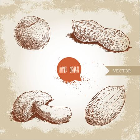 Hand drawn sketch style nuts set. Hazelnut, peanut, brazilian nut and pecan nutshells. Healthy food illustration. Vector drawings isolated on retro background.