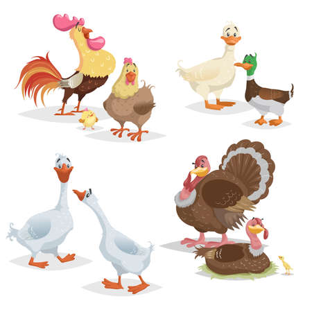 Cute cartoon farm birds set. Couple birds collection. Rooster and hen, ducks, geese and turkeys. Farm animals. Vecor illustrations isolated on white background.