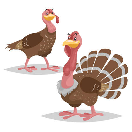 Cute turkey family. Male and female turkey. Farm bird. Domestic animals scene. Vector illustration isolated on white background. Illustration