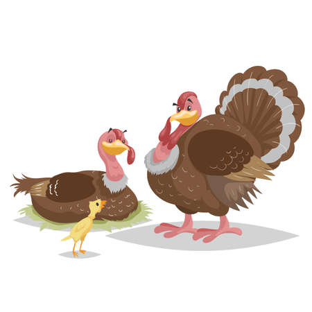 Cute turkey famile. Male and female turkey. Little turkey chicken. Farm bird. Domestic animals scene. Vector illustration isolated on white background.