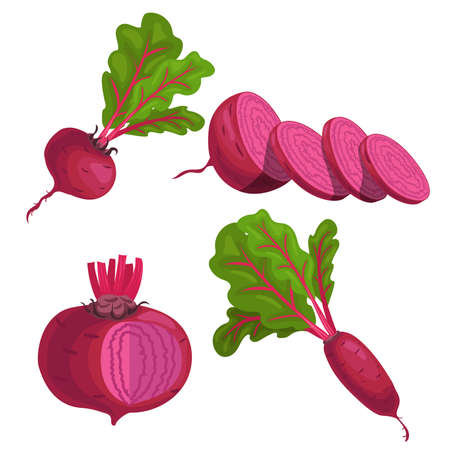 Beet roots set. Whole different beets with green leaves and slices. Red organic vegetables. Vector illustrations isolated on white background.
