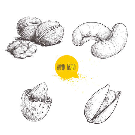 Hand drawn sketch style nuts set. Walnut, cashew, almond and pistachios. Collection of healthy natural food. Vector illustrations isolated on white background.