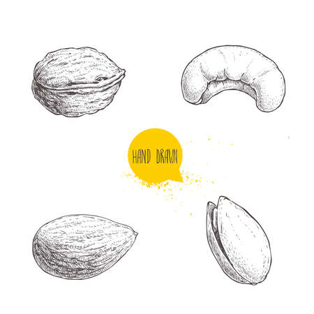 Hand drawn sketch style nuts set. Walnut, cashew, almond and pistachio. Collection of healthy natural food. Vector illustrations isolated on white background. Vector Illustratie