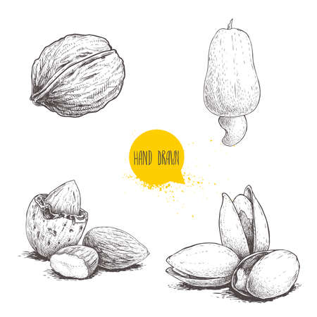 Hand drawn sketch style nuts set. Walnut, cashew fruit, almonds and pistachios. Collection of healthy natural food. Vector illustrations isolated on white background. Ilustração Vetorial