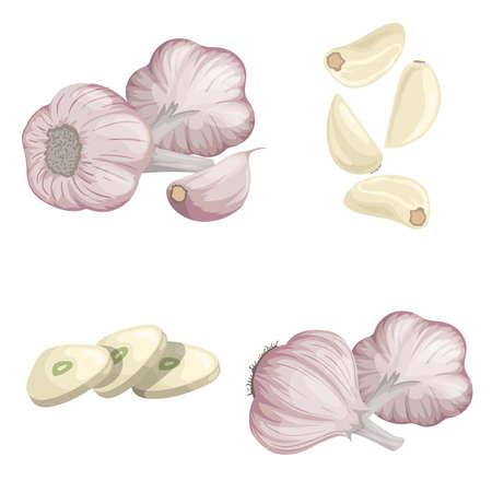 Garlics set. Cartoon flat style of fresh farm market organic product. Whole garlic bulbs, peeled whole and chopped sliced cloves. Group and single. Isolated on white. Organic food.