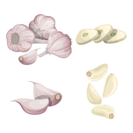 Garlics set. Cartoon flat style of fresh farm market organic product. Whole garlic bulbs, peeled whole and chopped sliced cloves. Group and single. Isolated on white. Organic food.
