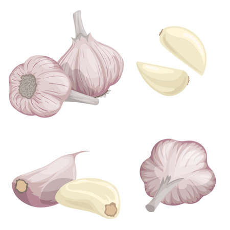 Garlic set. Cartoon flat style of fresh farm market organic product. Whole garlic bulbs and peeled cloves. Group and single. Isolated on white. Organic food. Stock Illustratie