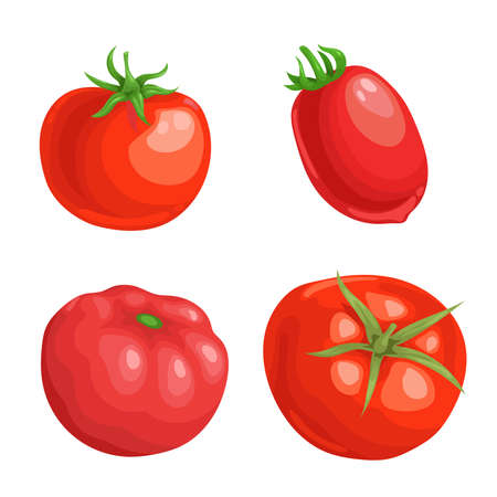 Cartoon different types tomatoes set. Red ripe vegetables isolated on white background. Vector illustrations. Stockfoto - 152389117