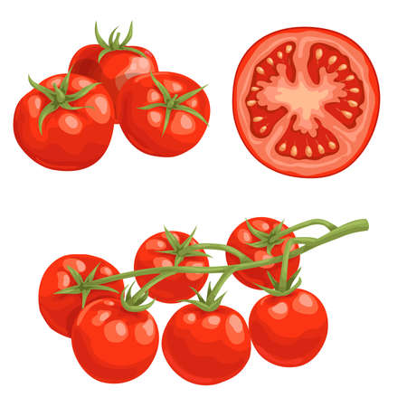 Cartoon different types tomatoes set. Red ripe vegetables isolated on white background. Group, slice and cherry tomatoes on branch. Vector illustrations. Stock Illustratie