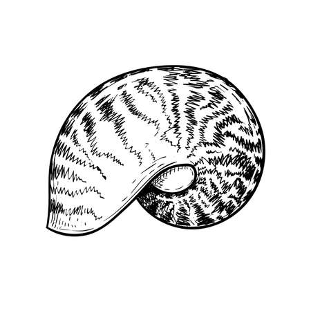 Sea shell nautilus. Hand drawn sketch style vector drawing of tropic reef undersea mollusk shell. Isolated on white background. Retro design. Vector illustration.