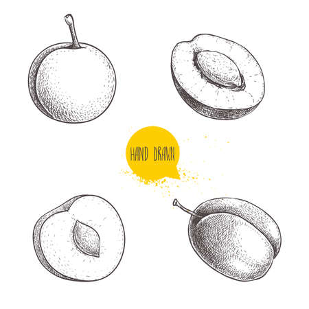 Different plums sketch set. Hand drawn illustration of ripe juicy plums and mirabelle plums. Whole and half with bones. Organic fruit vector drawings isolated on white background. Stockfoto - 152537777