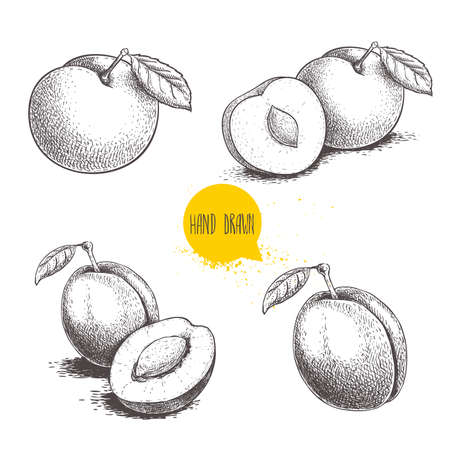 Different plums sketch set. Hand drawn illustration of ripe juicy plums and mirabelle plums. Whole and half with bones, single and group. Organic fruit vector drawings isolated on white background.