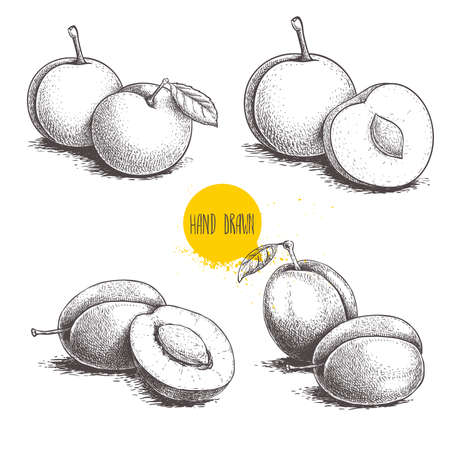 Different plums sketch set. Hand drawn illustration of ripe juicy plums and mirabelle plums. Whole and half fruit groups. Organic food vector drawings isolated on white background. Stock Illustratie