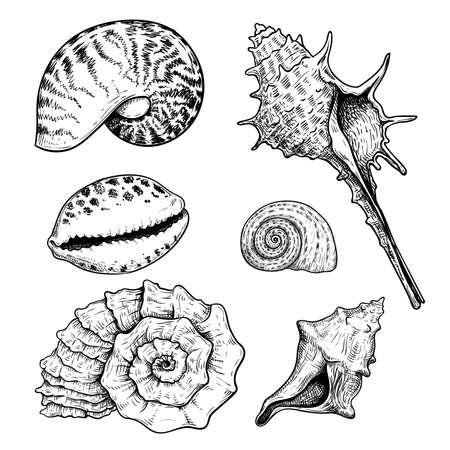 Sea shells sketch set. Hand drawn vector drawing of different types sea and ocean shells. Vector illustrations collection isolated on white background.