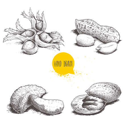 Hand drawn sketch style nuts set. Hazelnuts with leaves, peanuts, Brazilian nuts and pecan groups. Healthy food illustration. Vector drawings isolated on white background.