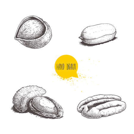 Hand drawn sketch style nuts set. Hazelnut, peanut, Brazilian nut and pecan. Cores and with nutshells. Healthy food illustration. Vector drawings isolated on white background. Stock Illustratie