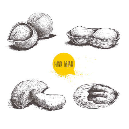 Hand drawn sketch style nuts set. Hazelnuts, peanuts, Brazilian nuts and pecan groups. Healthy food illustration. Vector drawings isolated on white background. Stock Illustratie