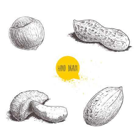 Hand drawn sketch style nuts set. Hazelnut, peanut, Brazilian nut and pecan nutshells. Healthy food illustration. Vector drawings isolated on white background.