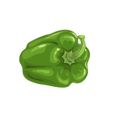 Fresh green bell pepper. Cartoon flat style icon. Lying vegetable vector illustration. Vegetarian farm fresh product. Best for education or market designs. Isolated on white background.