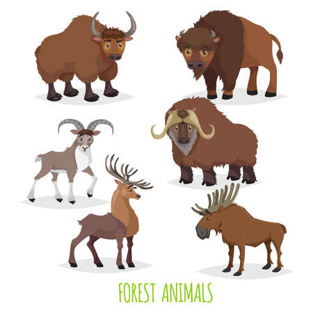 Set of woodland and forest hoofed and horned animals. Europe and North America fauna collection. Yak, bison, urial (mountain male sheep), musk ox, deer and moose.