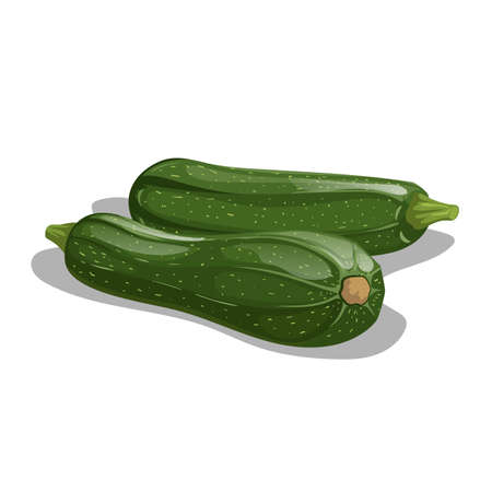 Fresh zucchini group in cartoon style. Vector illustration of farm fresh vegetable. Organic food isolated on white background.