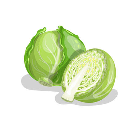 Cabbages group in cartoon trendy style. Healthy food. Farm fresh veggie just from the garden. Organic eco vegetable for salads. Vector illustration isolated on white background.