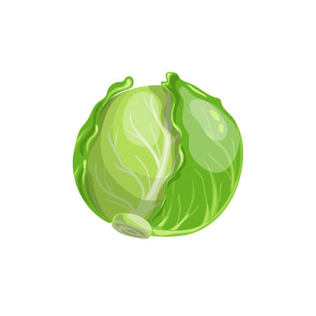Cabbage in cartoon trendy style. Healthy food. Farm fresh veggie just from the garden. Organic eco vegetable for salads. Vector illustration isolated on white background.