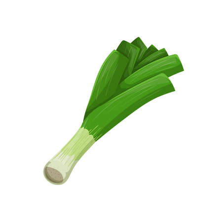 Leek in cartoon style. Healthy food. Farm fresh veggie just from the garden. Organic eco vegetable for salads. Vector illustration isolated on white background. Иллюстрация