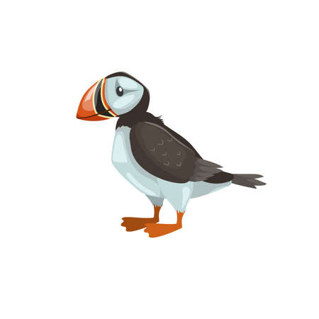 Puffin bird. Cartoon flat design. Vector illustration of arctic bird. Isolated on white background. Ilustração
