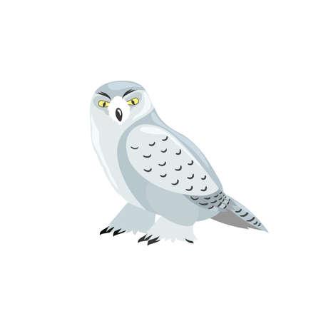 Arctic polar owl. Cartoon flat style illustration of polar and arctic bird. Vector illustration for kids, education. Isolated on white background. Stock Illustratie