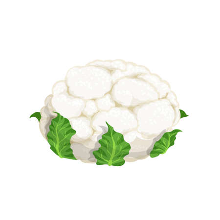 Cauliflower with green leaves in cartoon style. Organic vegetable. Farm fresh product. Vector illustration isolated on white background.