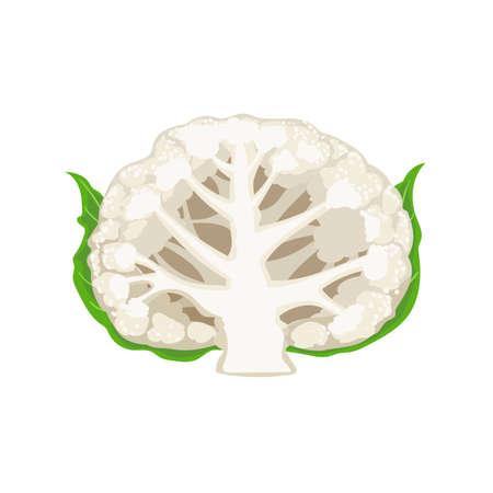 Cauliflower cutaway in cartoon style. Organic vegetable. Farm fresh product. Vector illustration isolated on white background.
